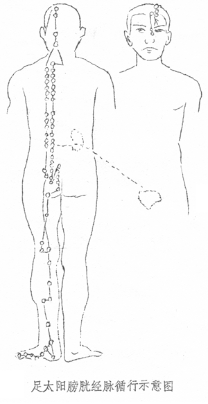 The Tai Yang Bladder Meridian of the Foot